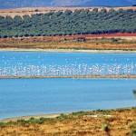 Flamingos Fuente de Piedra Lake